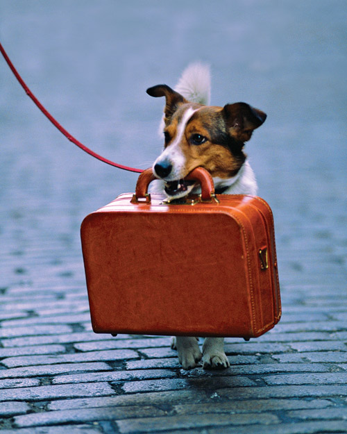 Kamloops Movers - Moving with your dog